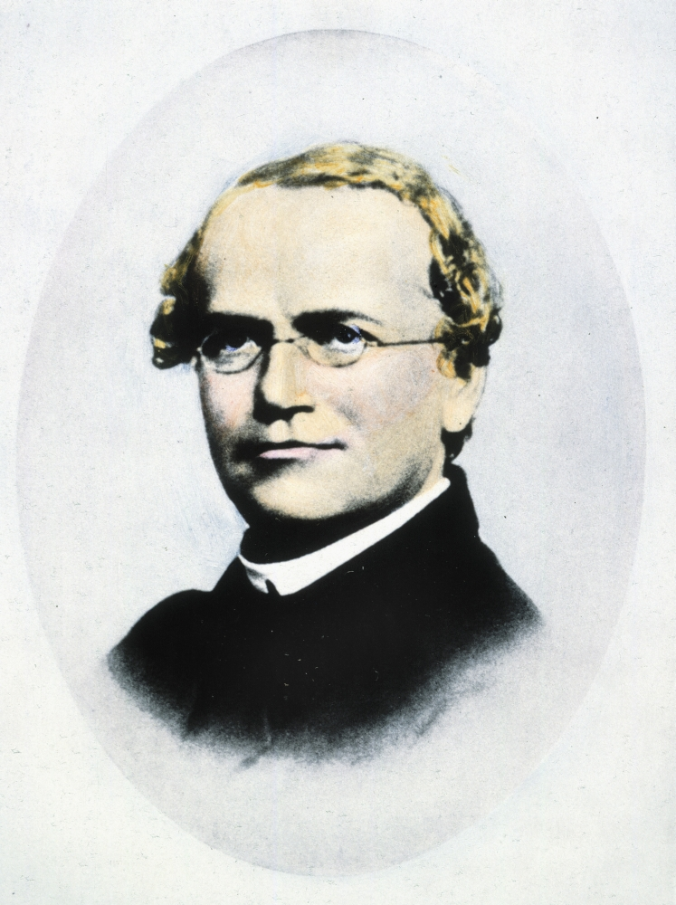 a biography of gregor mendel an augustinian monk Biography of gregor mendel mendel , the german-speaking augustinian monk who founded the modern with the work of the augustinian friar gregor johann mendel.