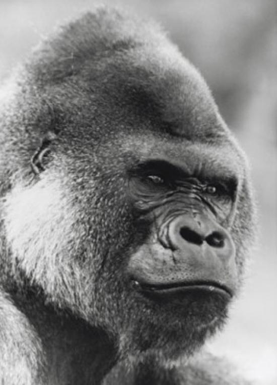 Gorilla paper coupon code free shipping